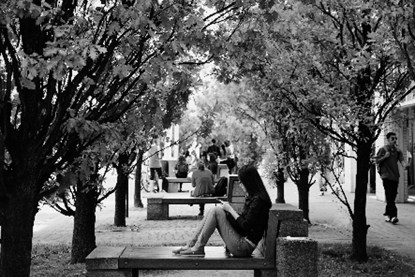 view of student reading under trees